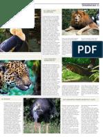 La Increíble Historia Del Calao y Sus Vecinos Del Zoo (2)