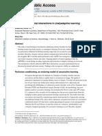Interacciones Mal Adaptativos de Amigdala Prefrontal