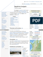 En Wikipedia Org Wiki Trachelyopterus Insignis