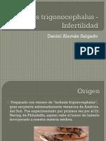 Lachesis trigonocephalus - Infertilidad