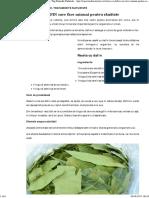 Reţeta Cu DAFIN Care Face Minuni Pentru Sănătate - Top Remedii Naturiste