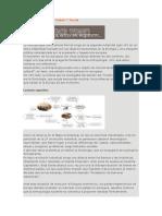 Antropología Resumen Global