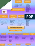 aparatodigestivo-131202083738-phpapp01