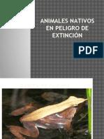 Animales Nativos en Peligro de Extinción