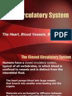 The CirculatorySystem