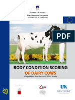 body condition of dairy cows.pdf