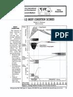 BODY CONDmON SCORES Michel A. Wattiaux Babcock Institute .pdf