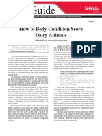 How to Body Condition Score Dairy Animals.pdf