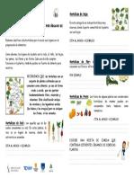 Ficha Hortalizas Por Organo de Consumo Para Imprimir - Copia