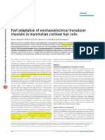 2003 - Kennedy, Evans - Fast Adaptation of Mechanoelectrical Transducer Channels in Mammalian Cochlear Hair Cells