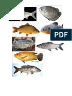 Air Tawar Dan Kolam Ikan