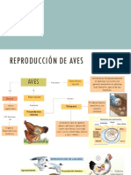 Reproducción de Aves