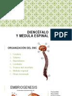 Diencefalo y Medula Revisado