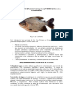 cachamabalnca-120517155352-phpapp01
