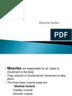 Anatomy muscular system