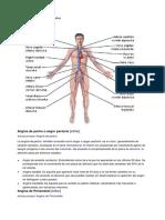 Aparato Circulatorio Con Sus Partes