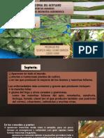 manchas foliares (Septoria y Helmintosporium)