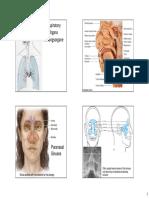 Breath Anatomy Handout