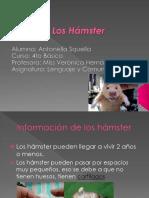 PPT Antonella Squella - Los Hamsters