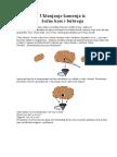Uklanjanje-kamenja-iz-žučne-kese-i-bubrega.pdf