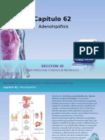 Raff Fisiologia Figuras c62 Adenohipofisis Gh4