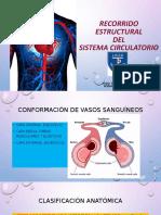 Recorrido Estructural Del Sistema Circulatorio.