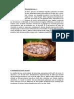 Características Del Cacao