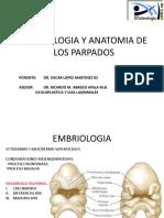 Embriologia y Anatomia de Los Parpados