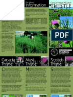 Thistle Canada, Musk, Scotch and Utah Invasive Weeds