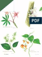 Flores Ignoradas de Las Plantas Comestibles