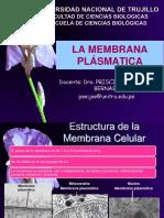 m.plasmatica