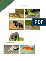 ANIMALES TERRESTRES.docx