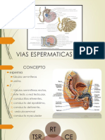Vias Espermaticas