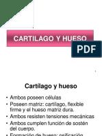 Cartilago y Hueso 03set