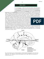 thalamus.pdf