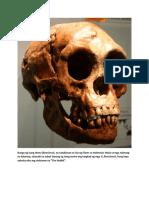 Bungo Ng Isang Homo Floresiensis