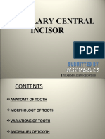 11- central incisor