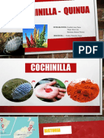 Exposicion de Cochinilla Final