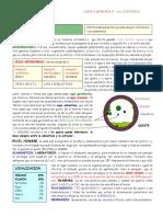 hidatidosis.pdf