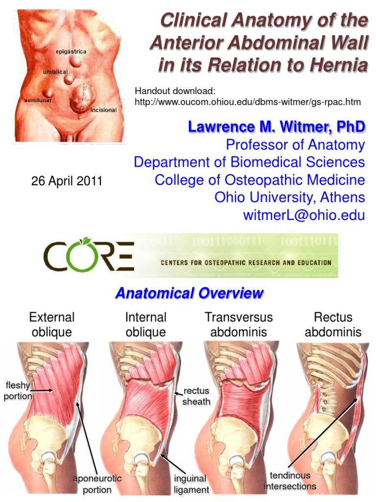 9. Anatomy Abdominal Wall and Hernias | Abdomen | Soft Tissue
