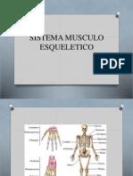 Sistema Muscular Esquelital