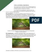 Diferencia Entre Parasito, Depredador y Parasitoides.