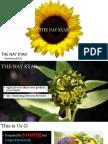 THE NAY KYAR PROFILE.pdf