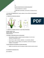 Grupo de Las Malvaceae y o
