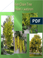 TREE SELECTION LEVEL1_PP.pdf
