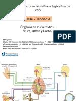 Anato 7 A.pdf