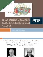 Modelo de mosaico fluido (4).pdf