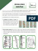 muestreo_para_analisis_foliares.pdf
