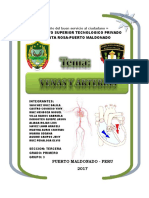 Sistema Circulatorio1