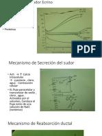 Composición del Sudor Ecrino Humano.pptx